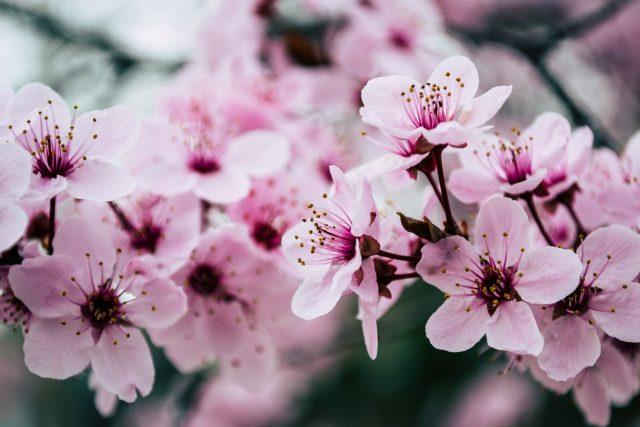 Frühblüher für einen farbenfrohen Garten